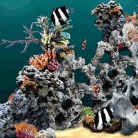 3D水族館